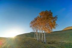 Herbstwiese, der Fall der weißen Birke, Sonnenuntergang Lizenzfreies Stockfoto