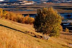 Herbstwiese im Morgen Stockfotografie