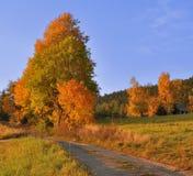Herbstwiese, -straße und -bäume Stockbilder