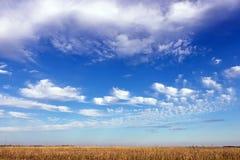 Herbstwiese und blauer Himmel Lizenzfreies Stockbild