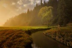 Herbstwiesen Lizenzfreies Stockbild