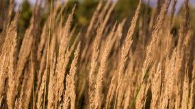 Herbstwiesenansicht mit trockenem Gras und Stroh im Vordergrund und grünen Bäumen im Hintergrund stockbild
