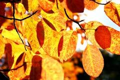 Herbstzeichen Lizenzfreies Stockfoto