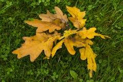 Herbstzeichen lizenzfreie stockfotografie