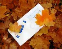 Herbstzeichen im Laub Lizenzfreie Stockbilder