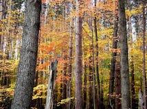 Herbstzeit Lizenzfreies Stockbild