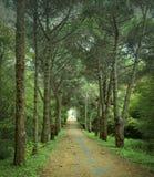 Herbstzeit, ein Straßentunnel von Bäumen Stockfoto