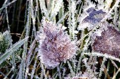 Herbstzeitfrost auf Gras und Blatt Lizenzfreie Stockbilder