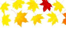 Herbstzusammensetzung, Ahornblätter, Draufsicht, flache Lage Grenze gemacht von Farbfallenden Ahornblättern stockfotos