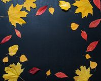 Herbstzusammensetzung mit Farbe lässt Verzierung auf hinterem Schieferbrett mit Kopienraum heller Ahornlaubjahreszeit-Herbsttext  Stockfoto