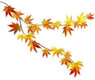 Herbstzweig Lizenzfreie Stockfotos