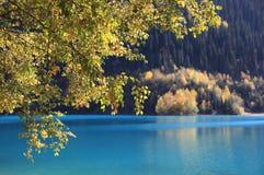 Herbstzweige Stockfotos