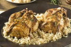 Herby gebackene kornische Spiel-Hennen lizenzfreies stockfoto