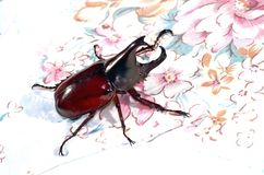 Hercules Beetle Royalty Free Stock Images