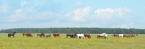 Herd. Small horse herd in a field Stock Photography