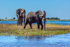 Botswana Stock Images