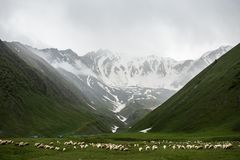 Herd of Animals on Grass Field Near Mountains stock photography