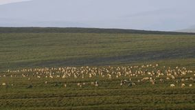 A herd of animals seeking fresh grass, Savanna, Africa royalty free illustration