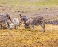 Herd of animals standing on pasture. Royalty Free Stock Photo