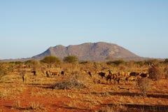 A herd of antelopes in Tsavo East Stock Photos