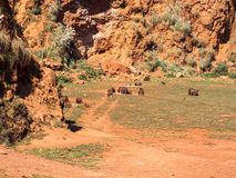 Herd of brown bears stock photography