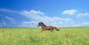 Herd of brown horses against a colorful blue sky and green hills stock photography
