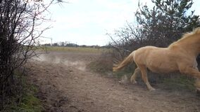 A herd of brown horses, a white horse and a mottled pony running gallop through a narrow spot between the bushes. Every horse runs