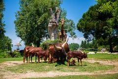 The herd of brown Watusi Bulls and a giraffe stock photo