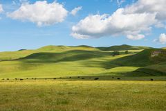 A herd of cattle grazing in sun-dappled lush green grasslands and rolling hills under a beautiful blue sky with puffy white clouds royalty free stock image