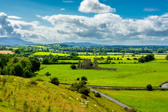 Herd Of Cattle In Landscape Of Tipperary In Ireland Royalty Free Stock Photos