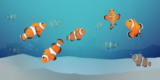 Herd of clown fish under the sea. Herd of clown fish or clown anemone fish under the blue sea with air bubbles and sand. Vector illustration Stock Photography
