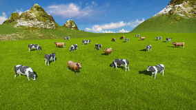 Herd of cows on alpine pasture Aerial view Royalty Free Stock Image