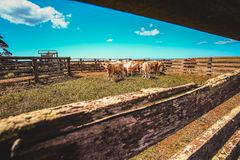 Herd Of Cows In Farm stock images