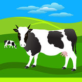 Herd of cows on the meadow. Black-white cows on the pasture Stock Photos