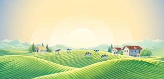 Herd of cows in summer rural landscape. At dawn among fields and pastures. Vector illustration Royalty Free Stock Photo