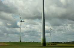 Herd of cows on the wind farm Royalty Free Stock Image