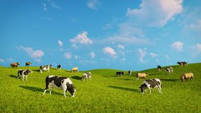 Herd of dairy cows on a green pasture. Herd of mottled dairy cows graze on a green pasture under blue cloudy sky at spring day. Realistic 3D illustration was Stock Images