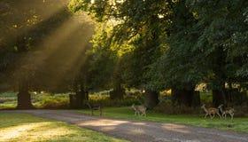 Herd Of Deer In Park. stock photo
