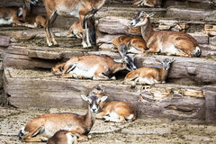 Herd of deer Stock Images