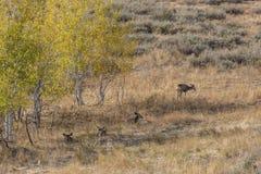 Herd of deer by trees. Stock Image