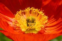 Herd der roten Blume lizenzfreie stockbilder