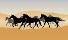 Herd in the desert Stock Photos