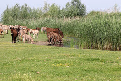 Herd of donkeys Royalty Free Stock Images