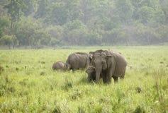 A herd of elephant Stock Photo