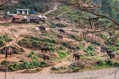Herd of elephant Stock Photography