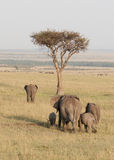 Herd of Elephant in the Mara, Kenya Stock Photos