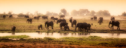 Herd of elephants in African delta Royalty Free Stock Images