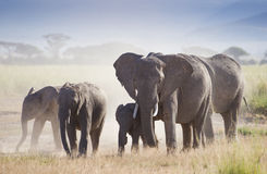 Herd of elephants in Amboseli National Park Stock Photography