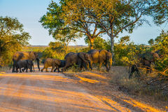 Herd of elephants becomes a dirt road Stock Photo