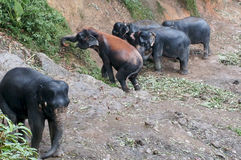 Herd of elephants going for a walk in the jungle Stock Image